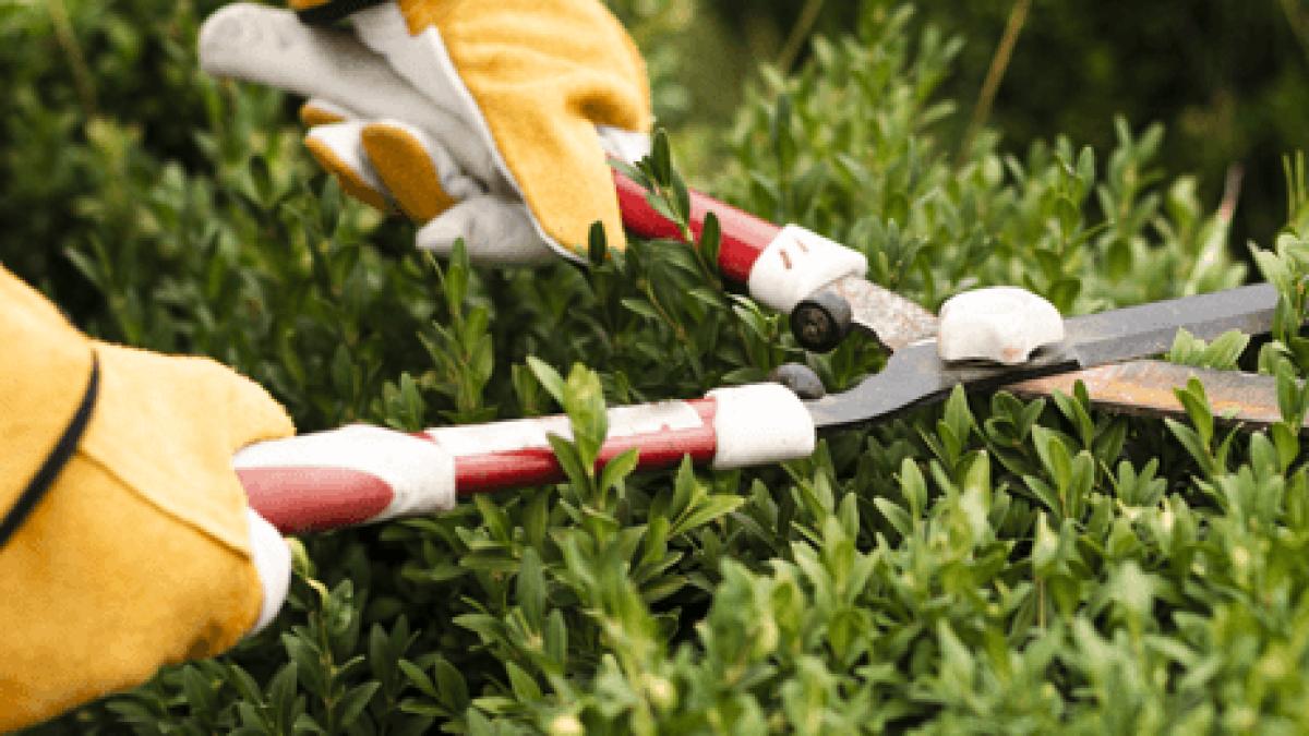 jardinage_clermont_ferrand